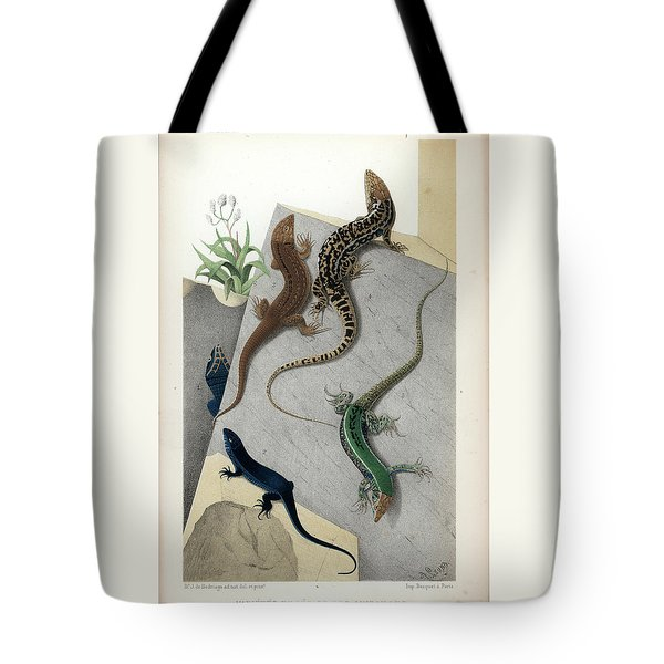 Varieties Of Wall Lizard Tote Bag