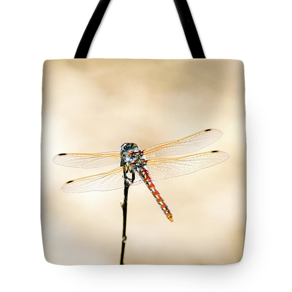Tote Bag featuring the photograph Varigated Meadowhawk Dragonfly Sympetrum Corruptum by Frank Wilson