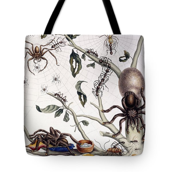 Various Arachnids From South America, 1726  Tote Bag