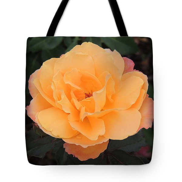 Velvety Orange Rose Tote Bag