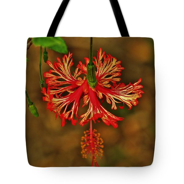 Tote Bag featuring the photograph Veriegated Lantern Hibiscus by Craig Wood