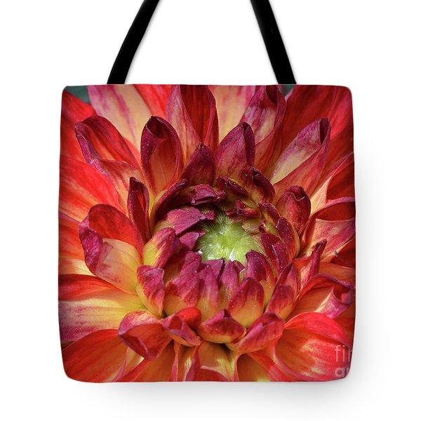 Variegated Dahlia Beauty Tote Bag