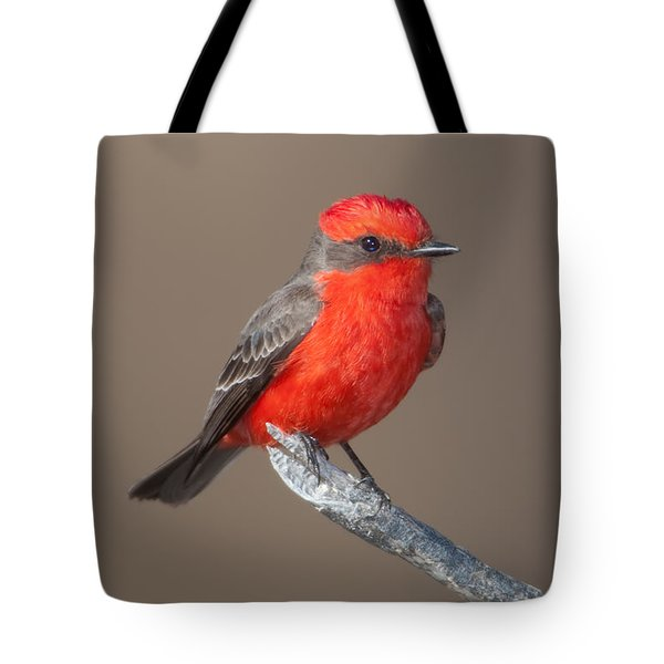 Vermilion Flycatcher Tote Bag