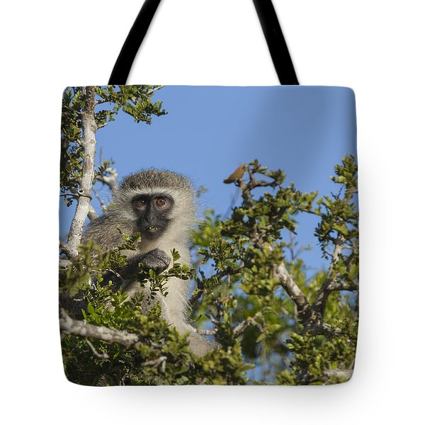 Vervet Monkey Perched In A Treetop Tote Bag