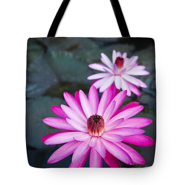 Vibrant Waterlilies Tote Bag by Dana Edmunds - Printscapes
