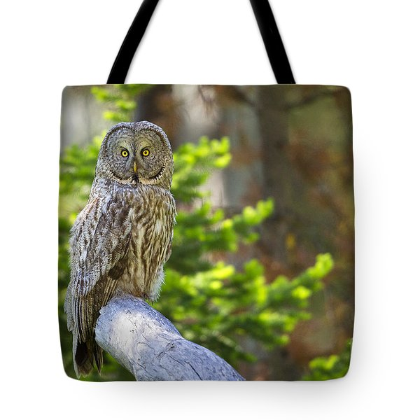 Tote Bag featuring the photograph Vigilant by Aaron Whittemore