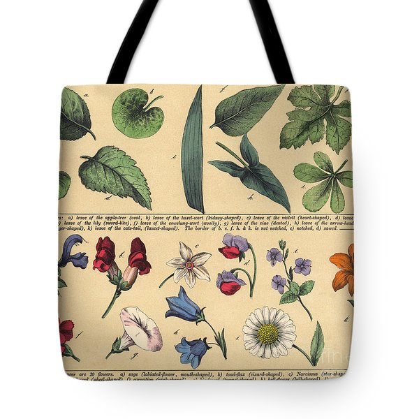 Vintage Botanical Print Showing Variety Of Leaves And Flowers Tote Bag