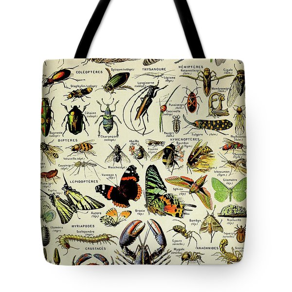 Vintage Illustration Of Various Invertebrates Tote Bag