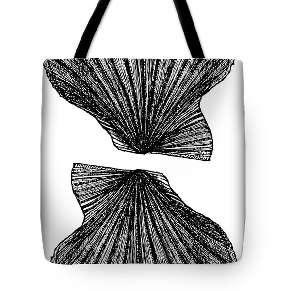 Tote Bag featuring the photograph Vintage Scallop Shells by Edward Fielding
