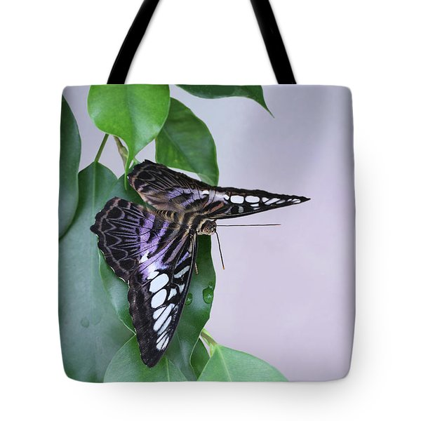 Violet Clipper Butterfly V2 Tote Bag