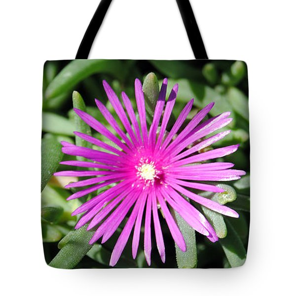 Ice Plant Tote Bag