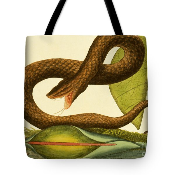 Viper Fusca Tote Bag by Mark Catesby