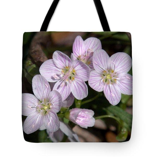 Virginia Or Narrowleaf Spring-beauty Dspf041 Tote Bag by Gerry Gantt
