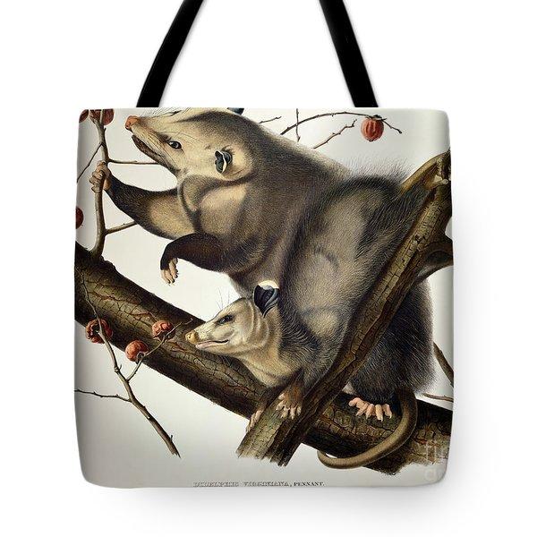 Virginian Opossum Tote Bag