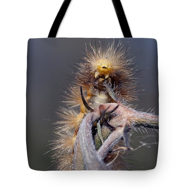 Tote Bag featuring the photograph Virginian Tiger Moth 4 by David Lester