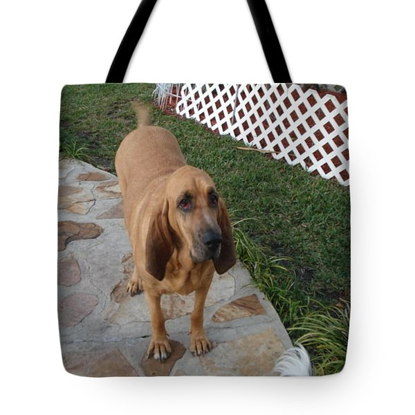 Waiting For Dinner Tote Bag by Val Oconnor