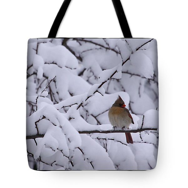 Tote Bag featuring the photograph Waiting For Mr. C by Shari Jardina
