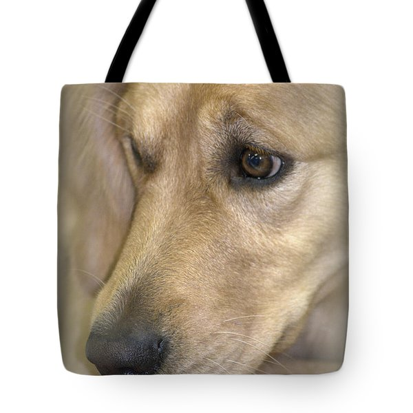 Waiting For You Tote Bag by Lori Seaman