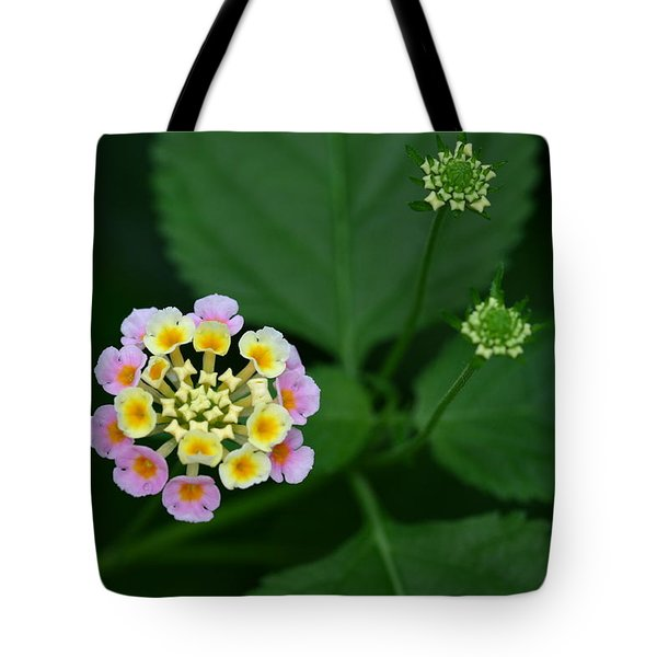 Tote Bag featuring the photograph Waiting Their Turn by Shari Jardina