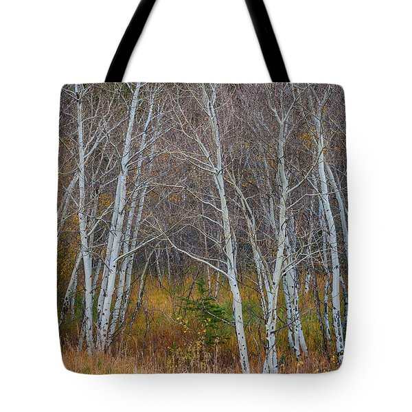 Tote Bag featuring the photograph Walk In The Woods by James BO Insogna