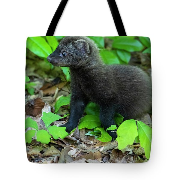 Tote Bag featuring the photograph Walking Through The Woods by Dan Friend