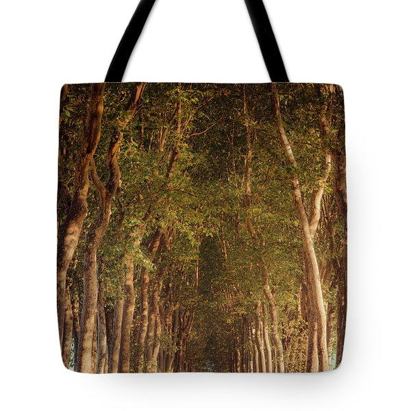 Warm French Tree Lined Country Lane Tote Bag
