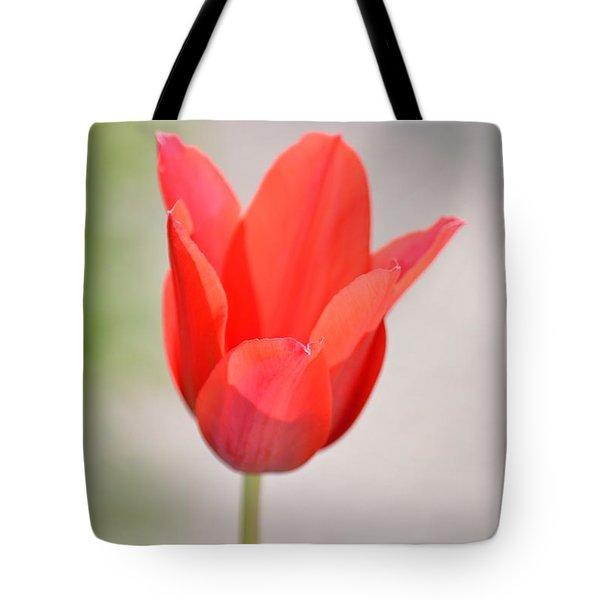 Warm Pink Tulip Tote Bag