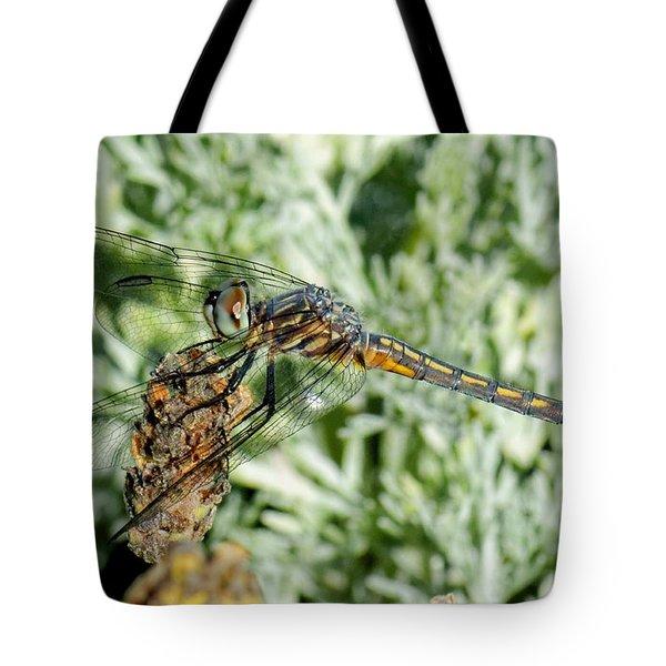 Warming-up - Darner Dragonfly Tote Bag
