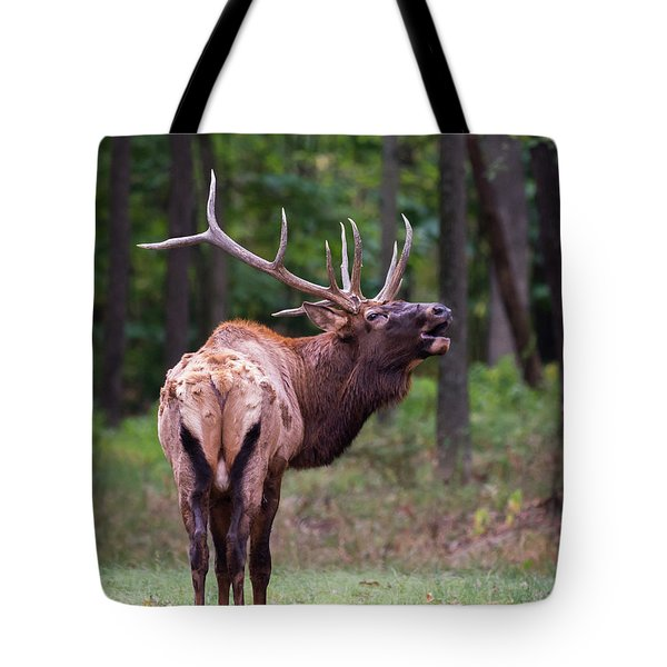 Tote Bag featuring the photograph Warning by Andrea Silies