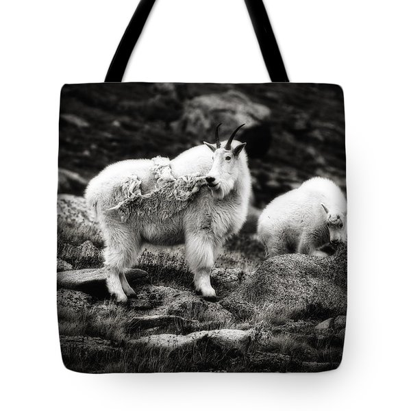 Tote Bag featuring the photograph Watchful  by Bitter Buffalo Photography