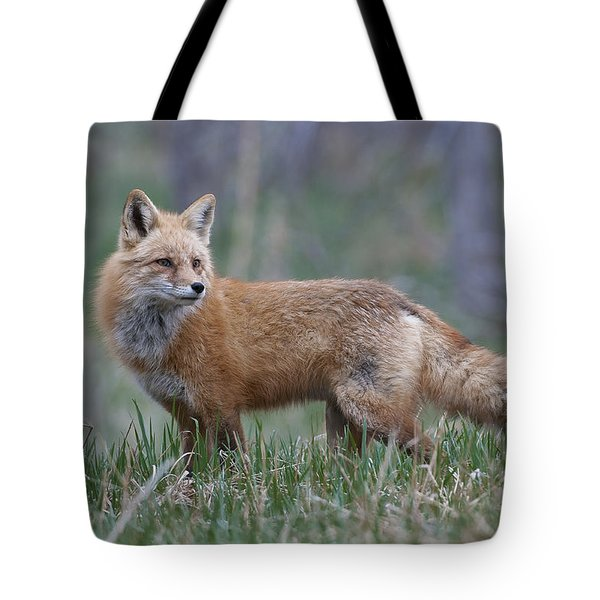 Tote Bag featuring the photograph Watchful by Gary Lengyel