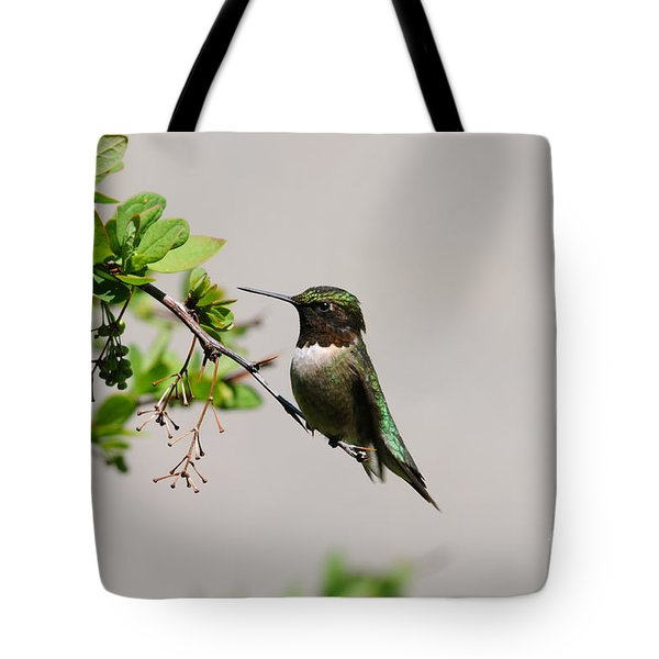 Tote Bag featuring the photograph Watchful Male Hummer by Sandra Updyke