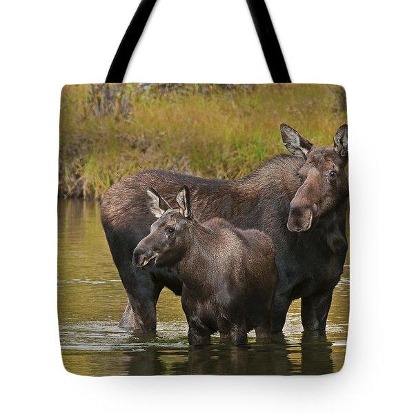 Watchful Moose Tote Bag