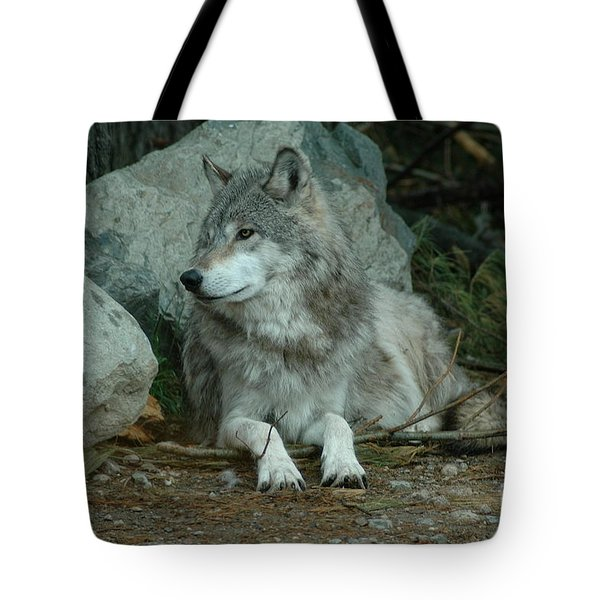 Watchful Wolf Tote Bag by Sandra Updyke
