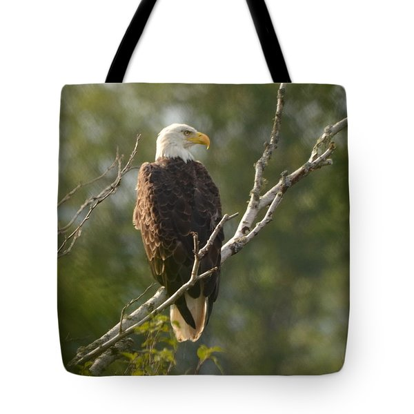Watching Eagle Tote Bag