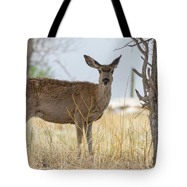 Watching From The Woods Tote Bag by James BO Insogna