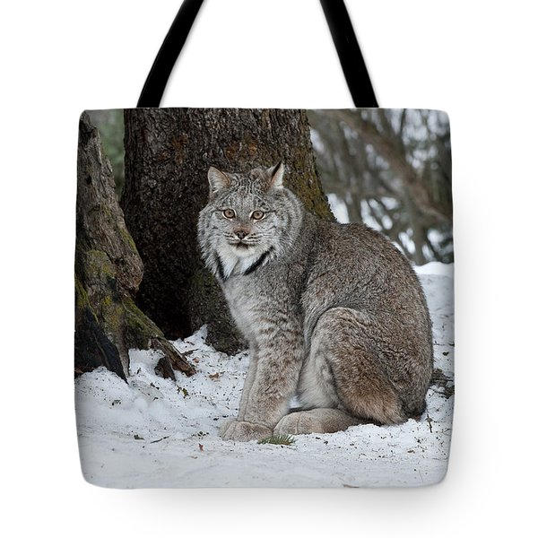 Watching Me Watch You Tote Bag by Sandra Bronstein