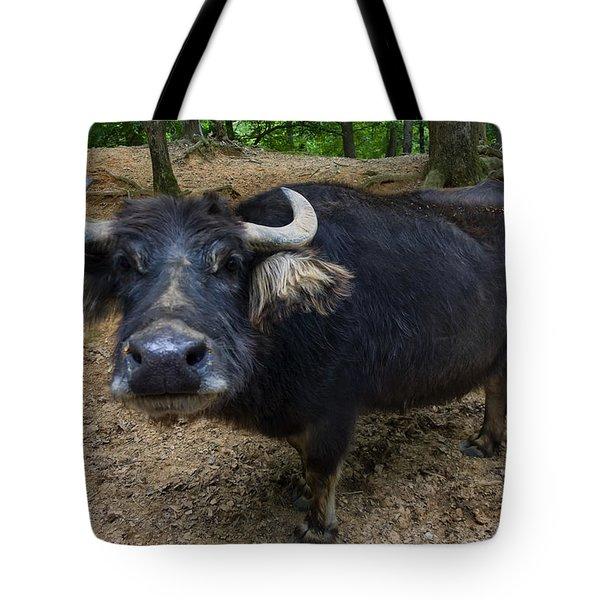 Water Buffalo On Dry Land Tote Bag