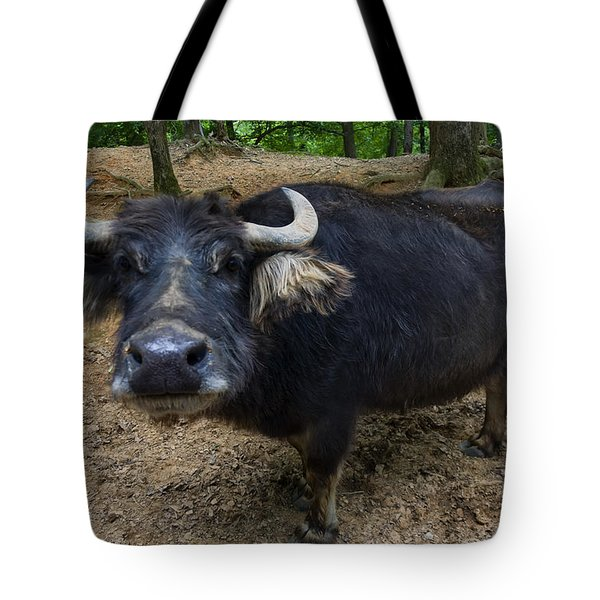 Water Buffalo On Dry Land Tote Bag by Chris Flees
