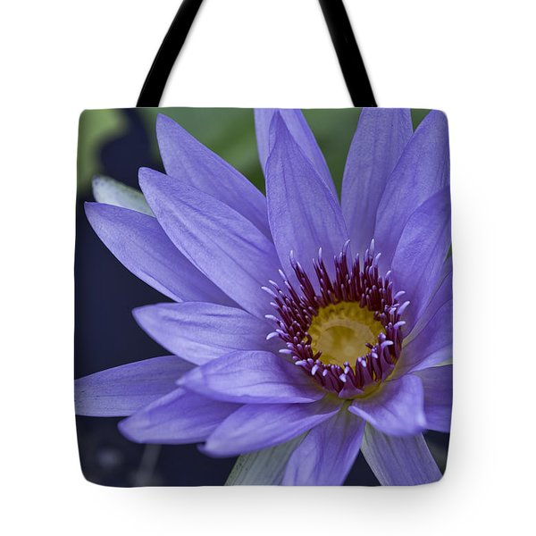 Water Lilly 2 Tote Bag