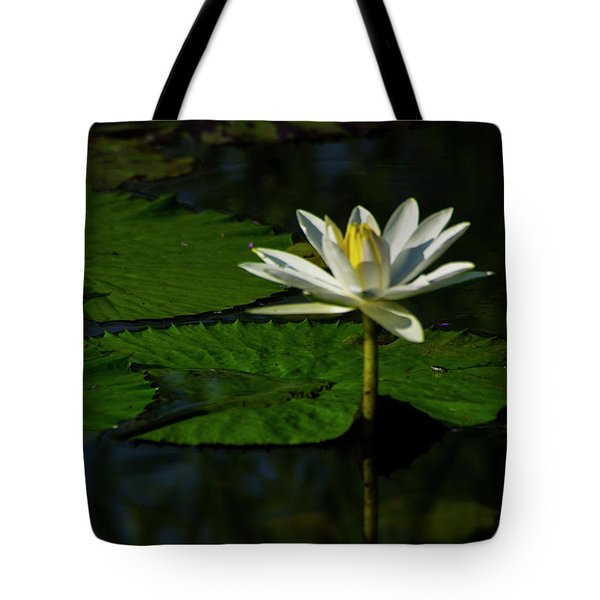 Tote Bag featuring the photograph Water Lily 1 by Buddy Scott