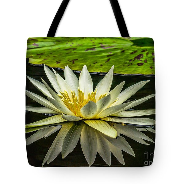 Water Lily 15-3 Tote Bag