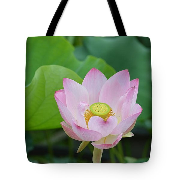 Waterlily Blossom With Seed Pod Tote Bag by Linda Geiger