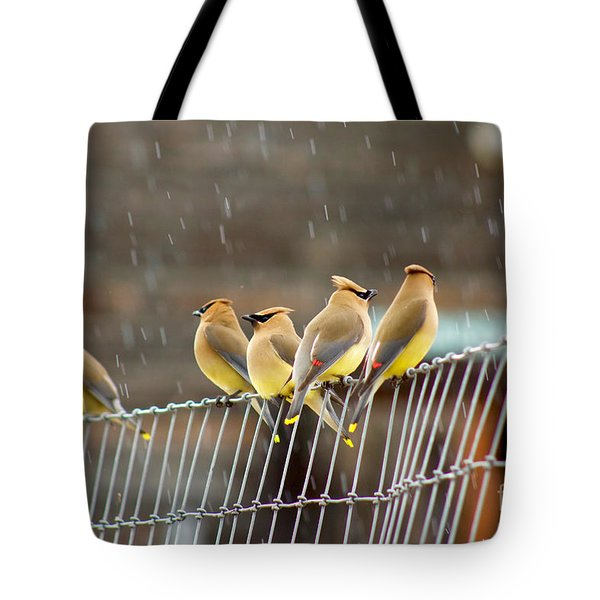 Waxwings In The Rain Tote Bag