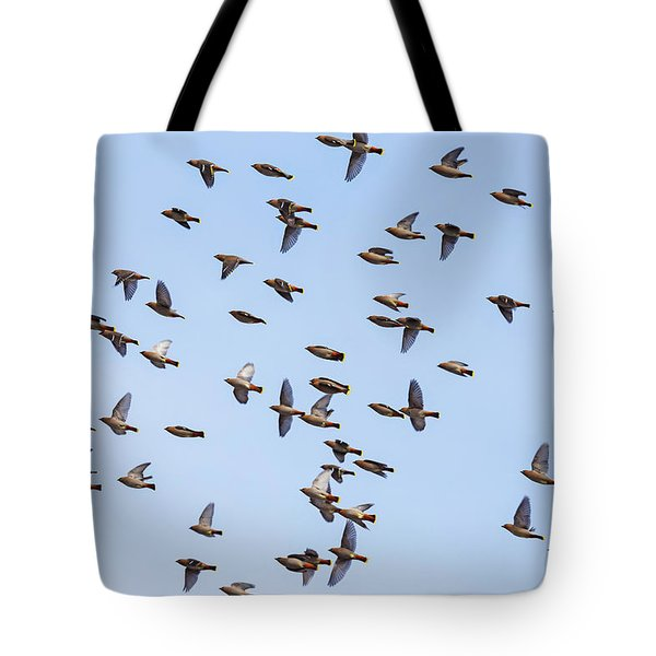 Tote Bag featuring the photograph Waxwings by Mircea Costina Photography