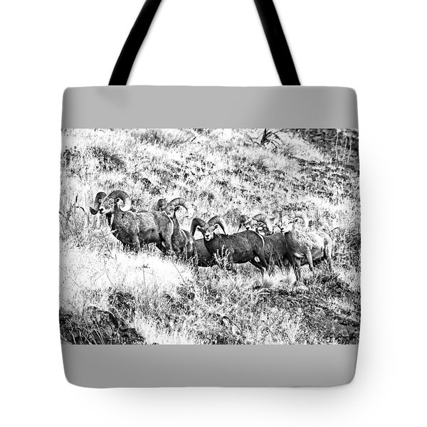 We Have A Visitor Tote Bag by Steve Warnstaff