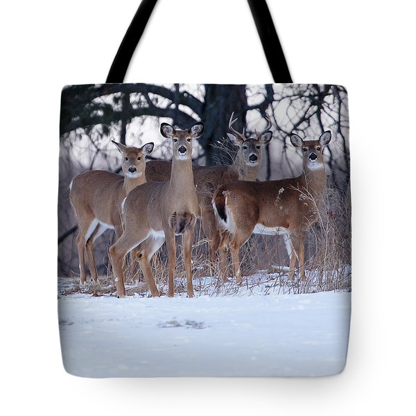 We Wish You A Merry Christmas Tote Bag by Gary Hall