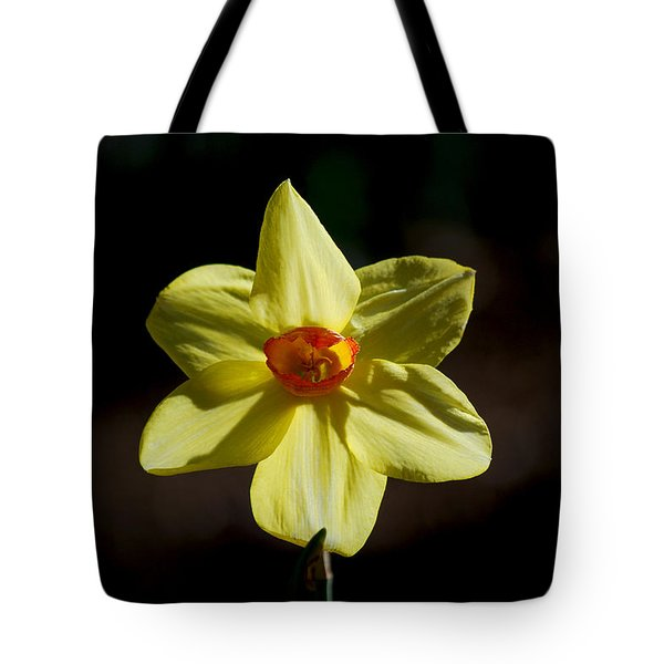 #wearealleternalstars Tote Bag by Becky Furgason