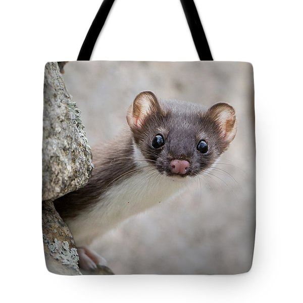 Tote Bag featuring the photograph Weasel Peek-a-boo by Stephen Flint