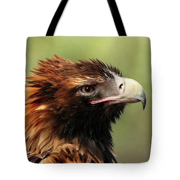 Tote Bag featuring the photograph Wedge-tailed Eagle by Marion Cullen